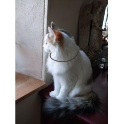 collier  selon lakhovsky pour chat