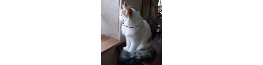 lakhovsky pour animaux